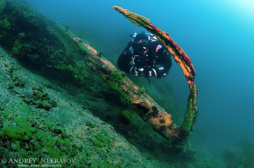 Diver near the flooded tree, lake Baikal, Siberia, Russia, Eurasia