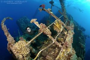Freediver dives on the wreckship Gianis D. Red Sea, Sharm El Sheikh, Egyp