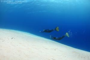 Freediver swims over a sandy bottom, Red Sea, Egypt