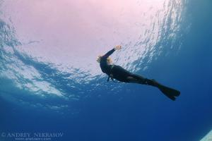 Freediving in Red Sea, Egypt