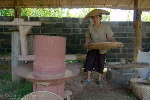 An elderly Thai woman cleans grain rice, Loei province, Thailand