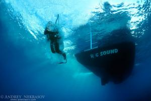 A diver jumps from a diving boat, Red sea, Egypt, Africa