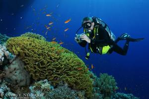 Diver photographing coral reef,  Red Sea, Egypt, Africa