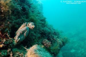 Underwater museum Reddening leaders, diver sculpture. Cape Tarhankut, Tarhan Qut, Black sea, Crimea, Ukraine, Eastern Europe