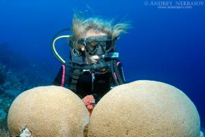 Diver looking at Coral reef. Red sea, Egypt, Africa