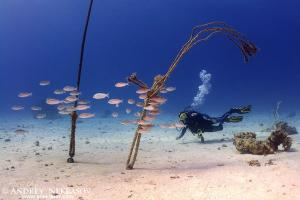 diver and coral reef
